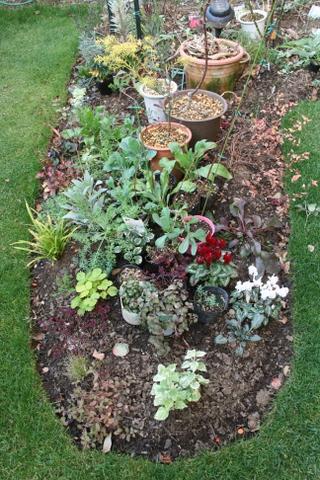 花壇への植え付け待ち