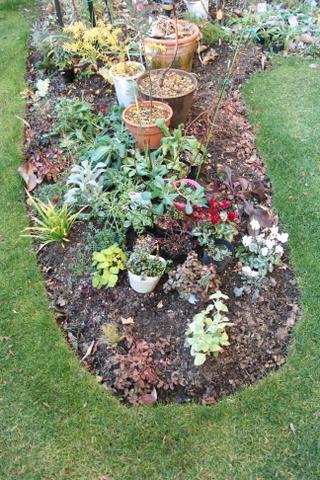 新花壇で待機中の苗