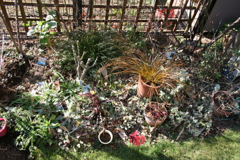 バラ花壇植え替え前