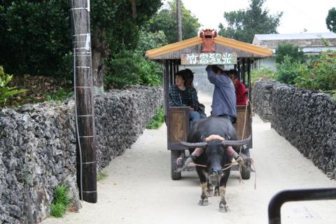 水牛車で町並み巡り