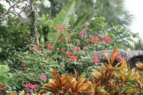 由布島の亜熱帯植物園1