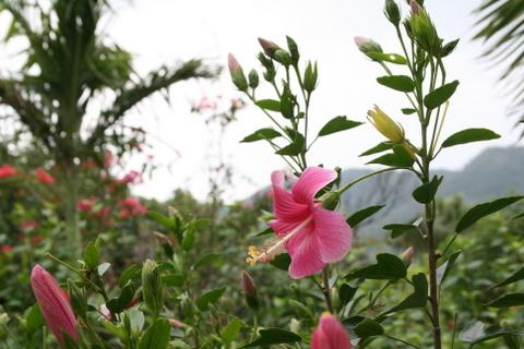 由布島の亜熱帯植物園2