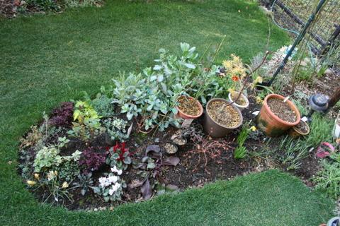 拡張花壇の様子