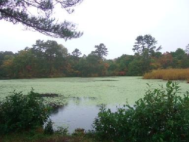 レンゲ沼2