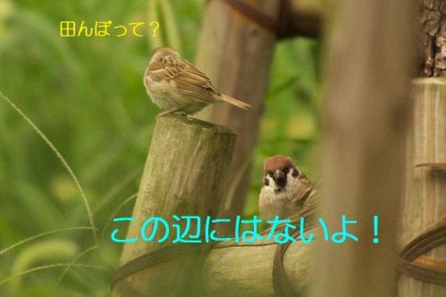 001_20130930213141344.jpg