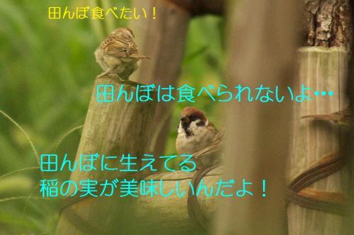 002_20130930213153e4c.jpg