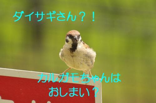 010_20130803191731766.jpg