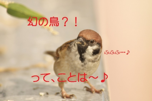010_20131104192012c5d.jpg