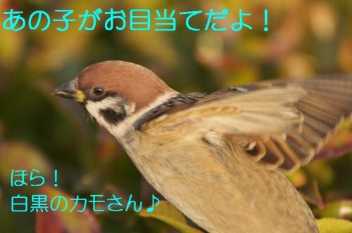 010_201401161838397fd.jpg