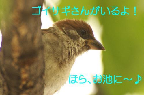 020_20130820194146fdd.jpg
