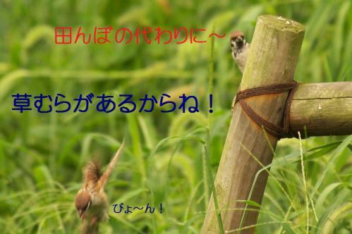 020_201309302132030e5.jpg