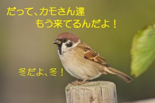 020_20131026192723c57.jpg