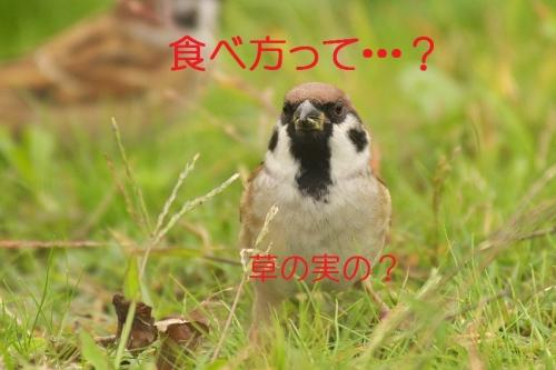 020_201310312052172ce.jpg