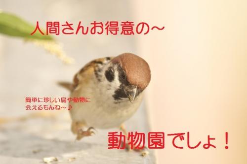 020_201311041920153ba.jpg