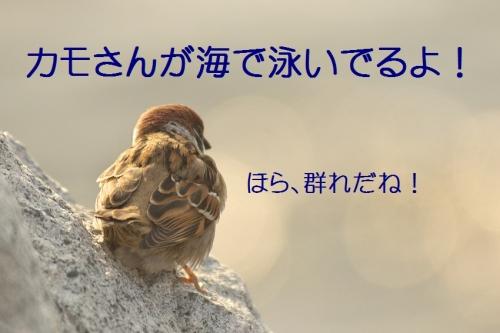 020_2014010718333550d.jpg