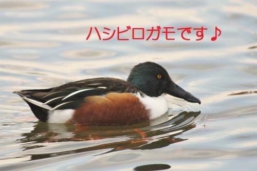 020_20140113182642aec.jpg