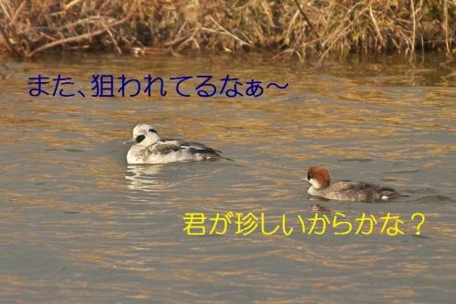 020_20140116183843a7d.jpg