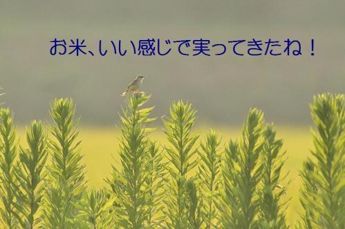 030_201308232229148eb.jpg