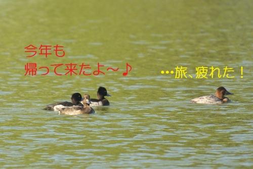 030_20131026192727033.jpg