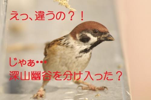030_20131104192019070.jpg