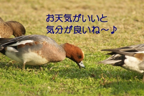 030_20131128182818b5b.jpg