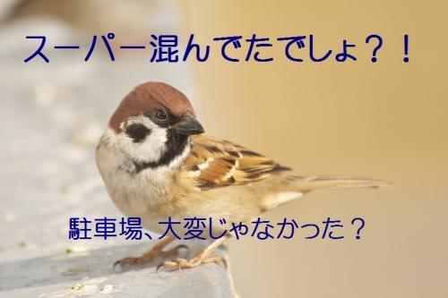 030_20131230203343685.jpg