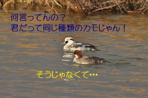 030_20140116183847045.jpg
