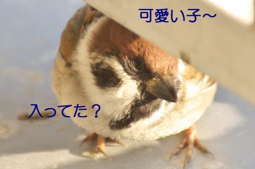 030_2014013121303863b.jpg