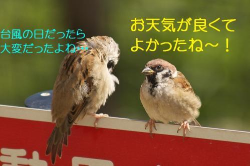040_2013092721171397c.jpg