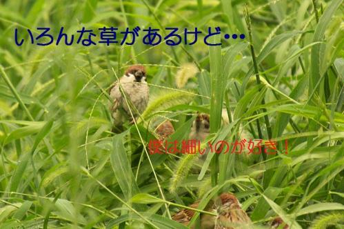 040_20130930213408c43.jpg