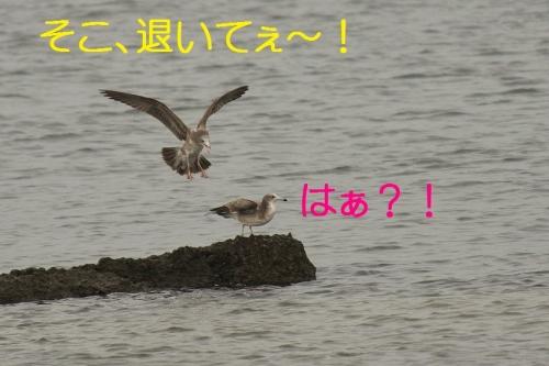 040_20131019180440b21.jpg