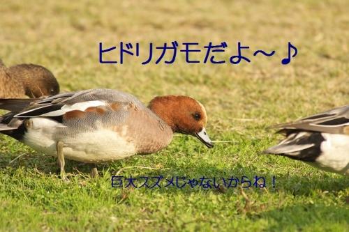 040_20131128182823c82.jpg