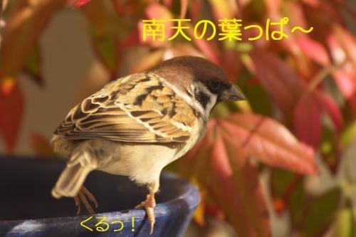 040_2013113020115526c.jpg