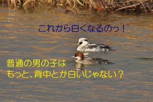 040_20140116183851d4e.jpg