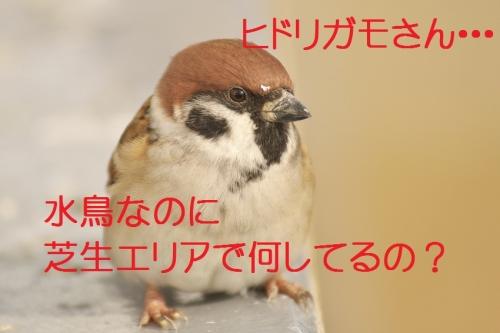 045_20131128182826a40.jpg