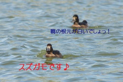050_20131026192743b87.jpg