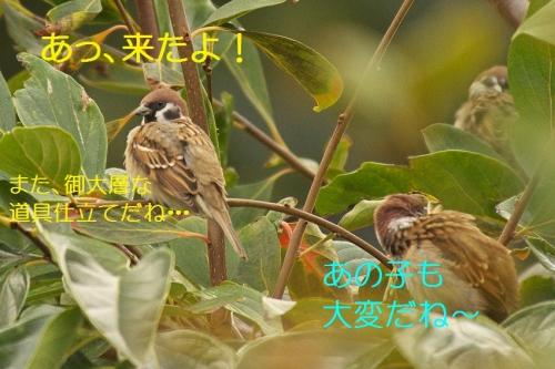 050_20131104192026fff.jpg