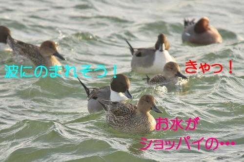 050_20140107183342c2e.jpg