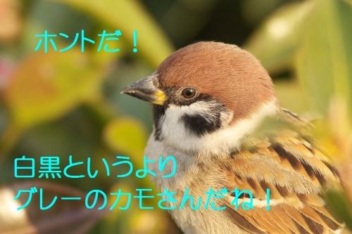 050_201401161838557c9.jpg