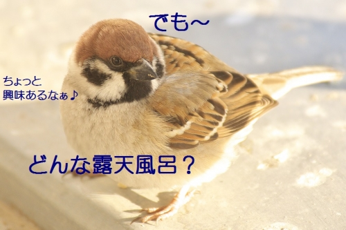 050_20140131213044acd.jpg