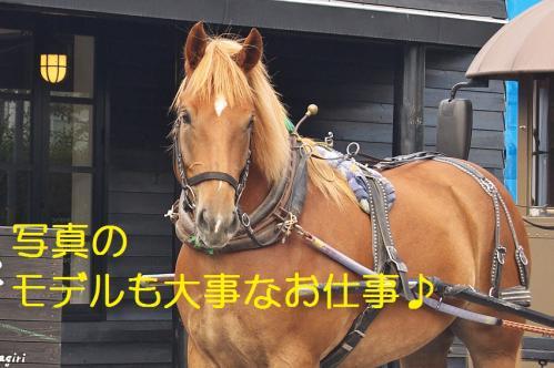 060_20130927212126412.jpg