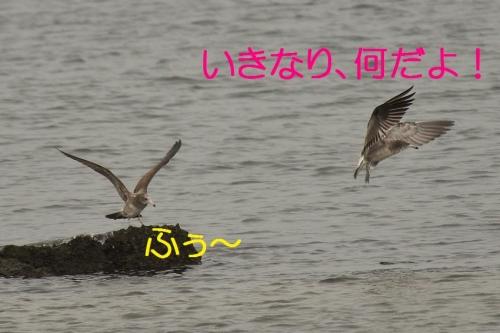 060_20131019180619e41.jpg