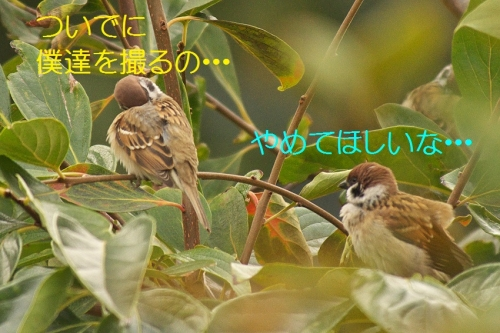 060_20131104192122ec3.jpg