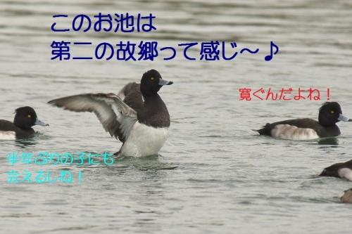 060_201401131828145de.jpg