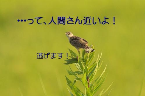 070_20130823223057fff.jpg