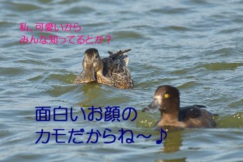 070_20131026192831ec9.jpg