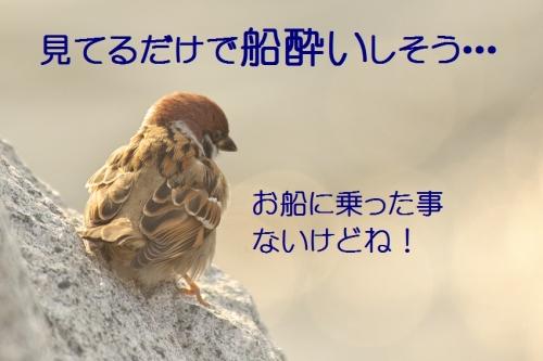 070_20140107183639745.jpg