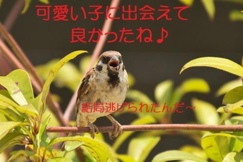 080_20130823223101ea9.jpg