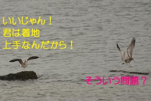 080_201310191806260f9.jpg