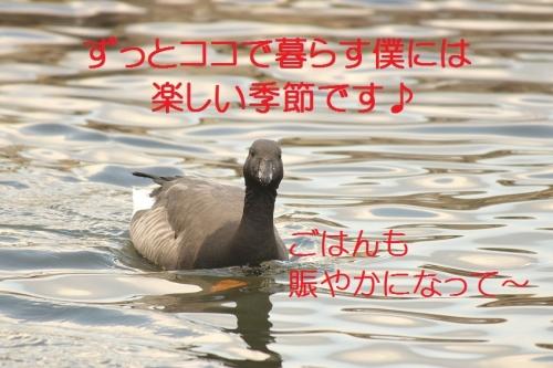 080_20140113182817fba.jpg